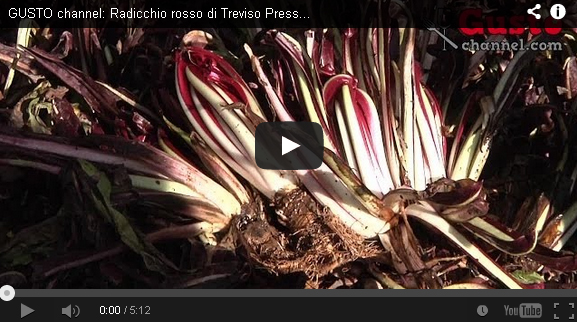 Radicchio rosso di Treviso