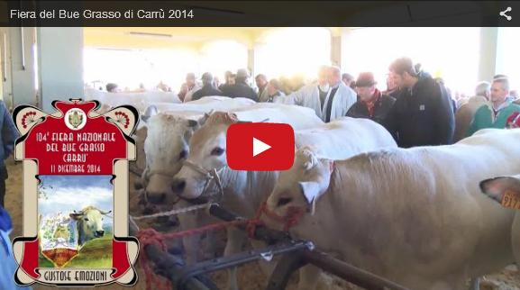 Fiera del Bue grasso a Carrù (CN)