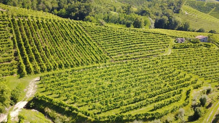 Terre Sapori e Vini – Tour in Valdobbiadene con Desiderio Bortolin