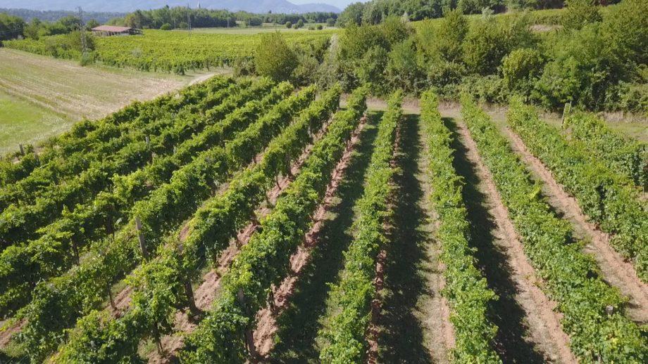 Azienda Vini Costa – Terre Sapori e Vini